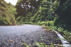 El camino concreto del asfalto a la naturaleza con el bosque tropical fotografía de archivo