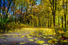 El camino cubrió otoños por el follaje Fotografía de archivo