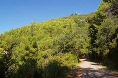 El camino cuesta arriba a través de un bosque del pino Fotos de archivo libres de regalías