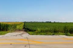 El camino de campo separa el campo de maíz del campo de la soja Imagen de archivo libre de regalías