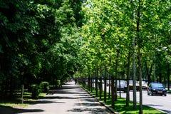 El camino de Kiseleff es un bulevar importante en Bucarest que corra como continuación que da al norte de Victory Street Fotos de archivo