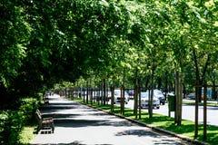 El camino de Kiseleff es un bulevar importante en Bucarest que corra como continuación que da al norte de Victory Street Imagen de archivo libre de regalías