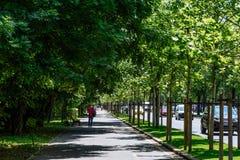 El camino de Kiseleff es un bulevar importante en Bucarest que corra como continuación que da al norte de Victory Street Fotografía de archivo