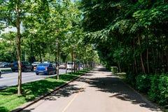 El camino de Kiseleff es un bulevar importante en Bucarest que corra como continuación que da al norte de Victory Street Imagenes de archivo