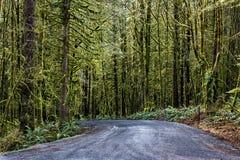 El camino de la grava a través de un bosque mojado Imagen de archivo