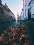 El camino de las hojas foto de archivo
