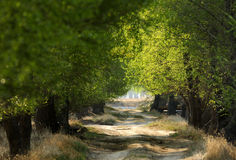 El camino de las maderas Imagen de archivo libre de regalías
