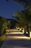 El camino de piedra debajo de las palmeras en la noche Imagenes de archivo