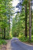 El camino de tierra vaga a través del bosque alto del pino Imágenes de archivo libres de regalías