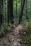 El camino? del amor - pies formados con los corazones Foto de archivo