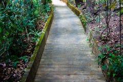 El camino del cemento es jardín con el árbol Imagen de archivo