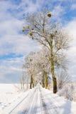 El camino del invierno Imagen de archivo libre de regalías