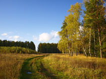 El camino del otoño Imagen de archivo