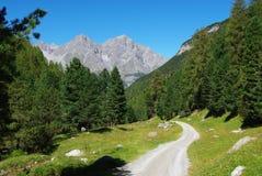 El camino, el bosque y las montan@as estrechos de la montaña acercan a S-Charl Foto de archivo libre de regalías