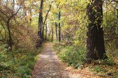 El camino en el bosque del otoño derramado con las hojas amarillas foto de archivo