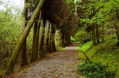 El camino en el bosque Fotografía de archivo libre de regalías