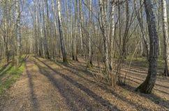 El camino en el bosque de la primavera Fotos de archivo libres de regalías