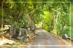 El camino en el bosque hizo que el ‹del †del ‹del †engrasa el cepillo Foto de archivo libre de regalías