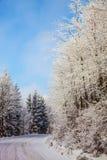 El camino en el bosque nevoso en el Año Nuevo Foto de archivo libre de regalías