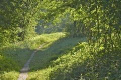 El camino en el prado asoleado fotos de archivo libres de regalías