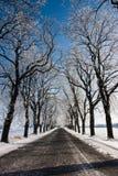 El camino en invierno Fotografía de archivo libre de regalías