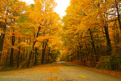 El camino en la caída Imagen de archivo
