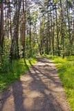 El camino en la madera Fotografía de archivo libre de regalías
