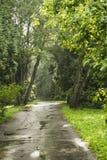El camino en el parque Fotografía de archivo