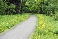 El camino en el parque de la primavera Foto de archivo libre de regalías