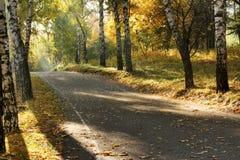 El camino en una arboleda brillantemente encendida en otoño Imagen de archivo libre de regalías