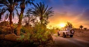 El camino en una arboleda de la palma en la puesta del sol imagen de archivo libre de regalías
