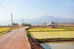 El camino en una granja del arroz Fotos de archivo libres de regalías