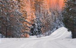 El camino es en el invierno Forest At Dawn El invierno Forest The Glow Of Dawn de la mañana cae en los pinos del invierno Un cami Imagen de archivo