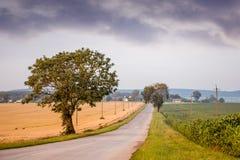 El camino está en el medio del campo en el cual el trigo maduro imágenes de archivo libres de regalías