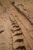 El camino fangoso de la selva del CU vertical de la opinión de ángulo bajo con el neumático nudoso sigue curvar a la izquierda Fotos de archivo