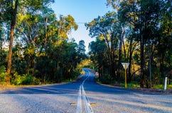 El camino forestal foto de archivo libre de regalías