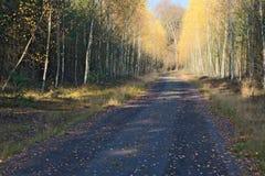 El camino forestal Imagen de archivo libre de regalías