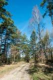 El camino forestal Imagenes de archivo