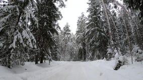 El camino forestal del invierno en el bosque en invierno almacen de metraje de vídeo
