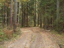 El camino forestal derramado con amarillo caido se va en bosque del otoño viejo Fotos de archivo libres de regalías