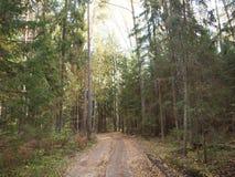 El camino forestal derramado con amarillo caido se va en bosque del otoño viejo Imagen de archivo