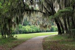 El camino hermoso con el musgo cubrió los árboles que colgaban sobre él Fotografía de archivo libre de regalías