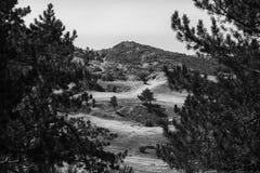 El camino a la montaña a través de los pinos, el paisaje, bw Fotos de archivo