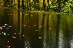 El camino mojado con rojo se va en parque del otoño Foto de archivo libre de regalías