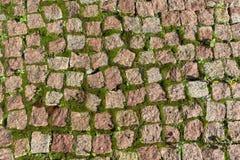 El camino pavimentado con las piedras o el musgo cuadrados de las piedras y del crecimiento Imágenes de archivo libres de regalías