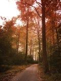 El camino tomado menos Foto de archivo
