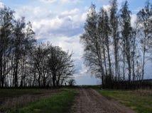 El camino a través de la tierra con los árboles de abedul Imagen de archivo libre de regalías