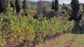 El camino a través de las colinas de Toscana, y vid con los manojos de uvas maduros metrajes