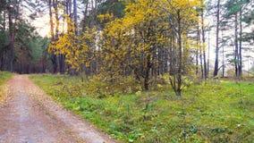 El camino a través de las hojas hermosas del bosque del otoño se sacude apenas en el viento metrajes