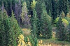 El camino a través de un prado con una hierba alta La hierba es crushe foto de archivo